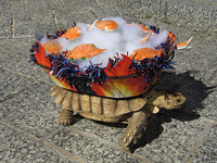 Brutus, a South African tortoise, dressed as a steaming pot of crabs